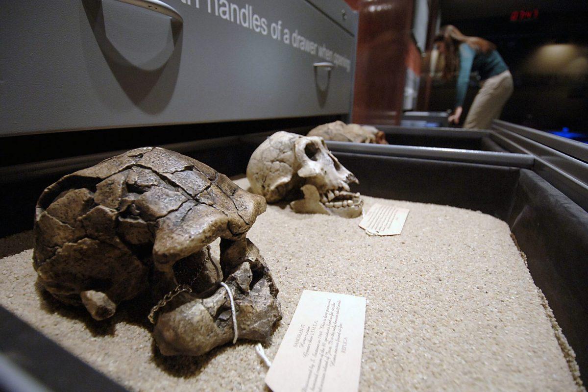 origins-centre-skulls-1536x1020